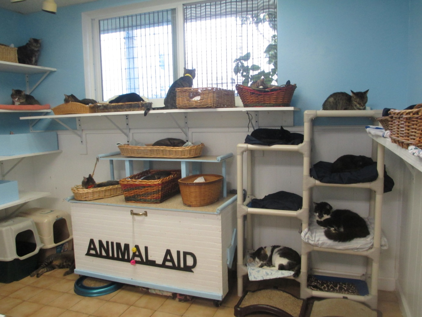 Animal Aid Inc a non profit South Florida pet adoption shelter